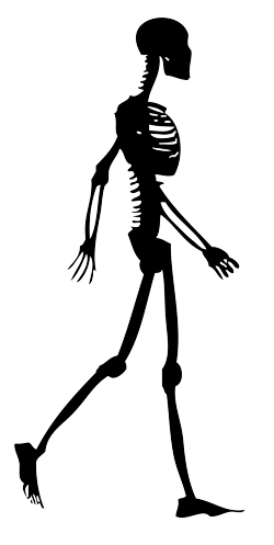 skeleton-walking-1